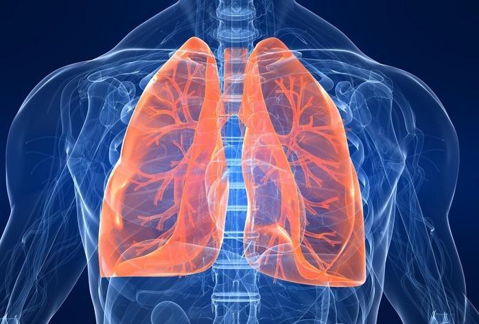 pulmon1