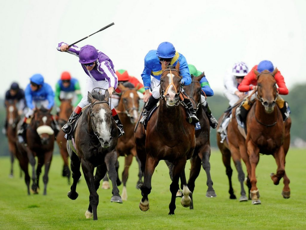 caballos carrera