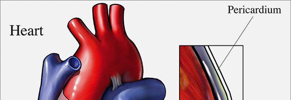 El Pericardio en MTC, Maestro Corazón